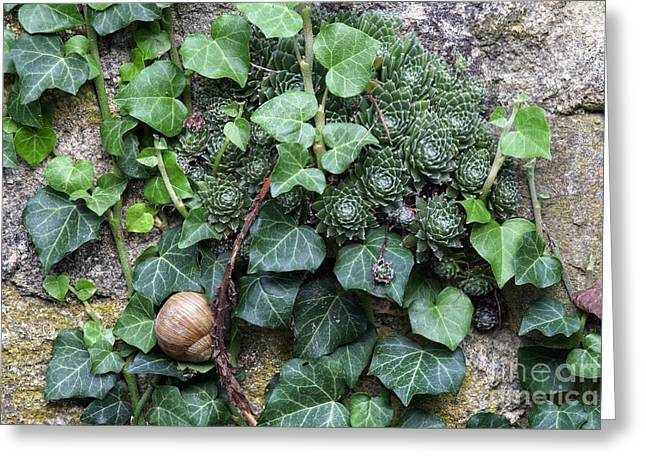 Aye Greeting Cards - Overgrown Wall With Snail Greeting Card by Michal Boubin