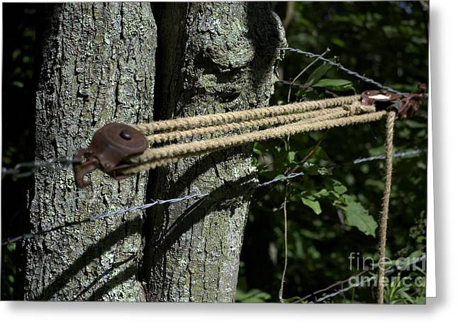 Wire Tree Greeting Cards - Overseers Of The Meeting Of The Mind Greeting Card by The Stone Age