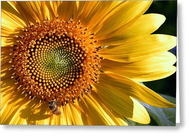 Overtime Greeting Cards - OVERTIME Sunflower with Honeybee Shadow Greeting Card by Sindi June Short