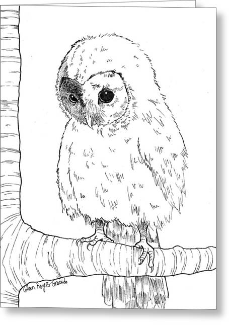 Best Sellers -  - Barn Pen And Ink Greeting Cards - Owl Baby Greeting Card by Callan Rogers-Grazado