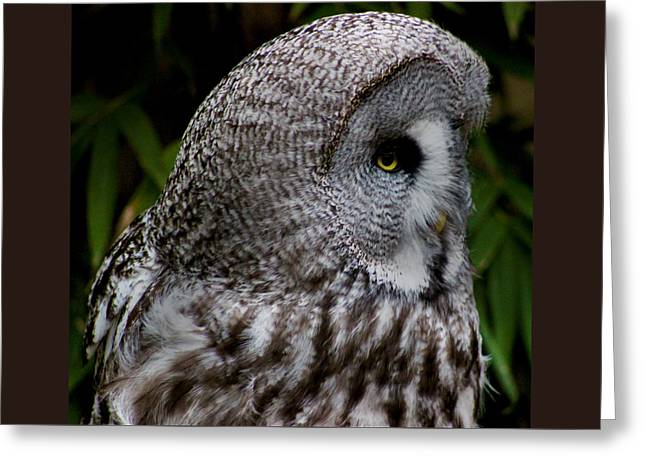 Owl Photographs Greeting Cards - Owl Eye Greeting Card by Martin Newman