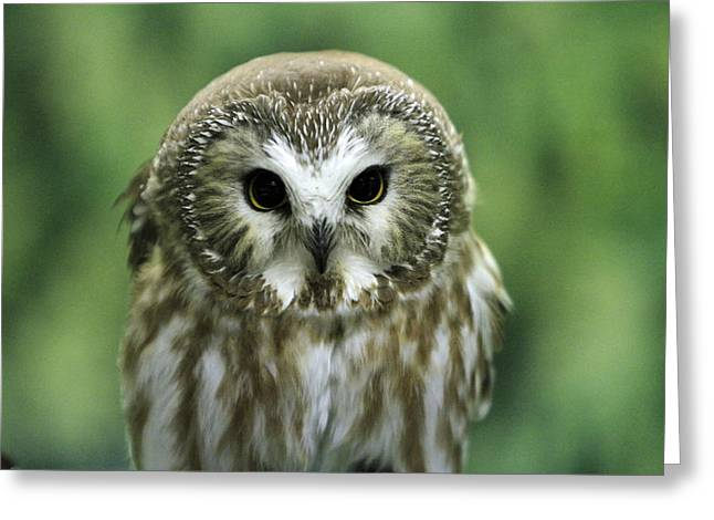 Saw Pyrography Greeting Cards - Owl Face Greeting Card by Shoal Hollingsworth