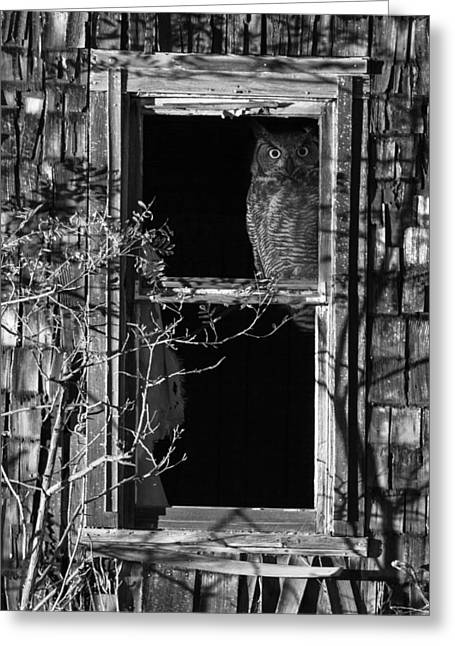 Looking Out The Window Greeting Cards - Owl in the Window Greeting Card by Angie Vogel