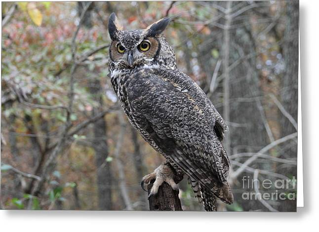 James Pyrography Greeting Cards - Owl  Greeting Card by Laurie Chrisco