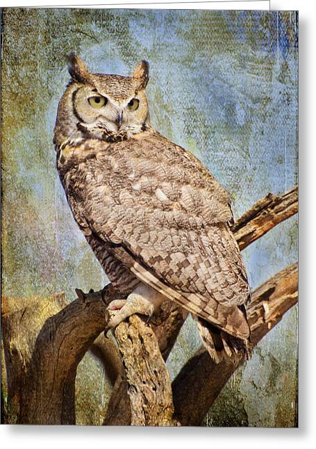 Owl On A Tree Greeting Card by Barbara Manis