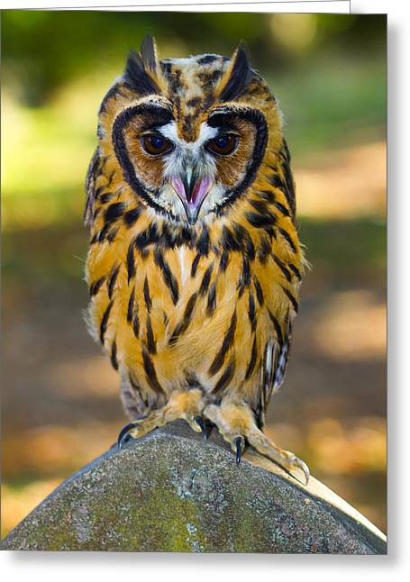 Lovely Owl Greeting Cards - Owl Perched On Gravestone  Greeting Card by Yuval Raeburn