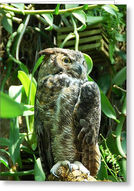 Owl Portrait 2 Greeting Card by Aimee L Maher Photography and Art Visit ALMGallerydotcom
