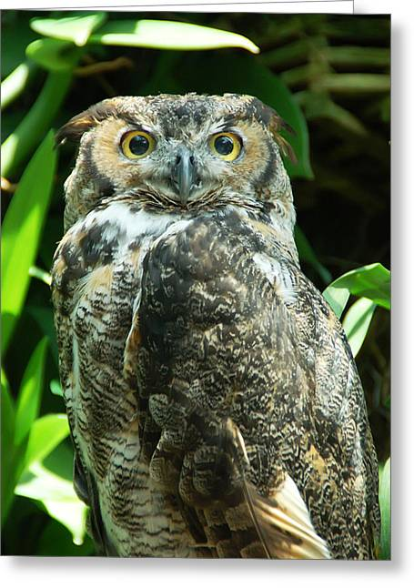 Owl Portrait Greeting Card by Aimee L Maher Photography and Art Visit ALMGallerydotcom