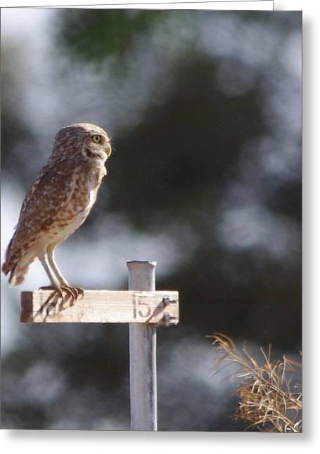 David Rizzo Greeting Cards - Owl profile Greeting Card by David Rizzo