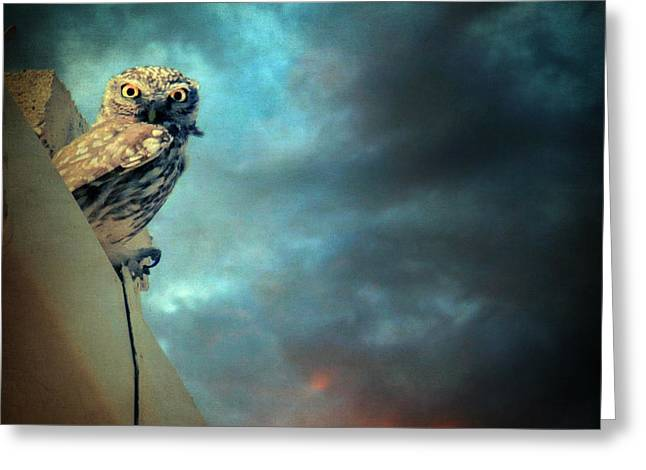 Beautiful Scenery Greeting Cards - Owl Greeting Card by Taylan Soyturk