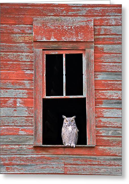 Owl Window Greeting Card by Leland D Howard