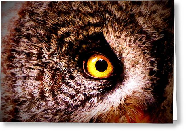 Neutral Colours Greeting Cards - Owls Eye Greeting Card by Ramona Johnston
