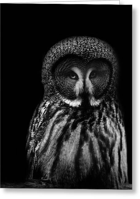 Owl Photographs Greeting Cards - Owls Eyes Greeting Card by Martin Newman