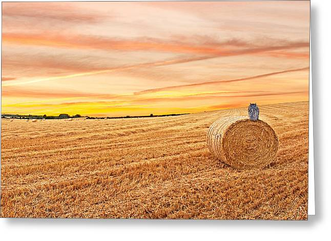 Hayroll Greeting Cards - Owls Harvest Supper Greeting Card by Gill Billington