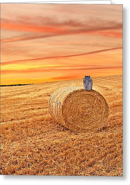 Harvest Time Greeting Cards - Owls Harvest Supper Vertical Greeting Card by Gill Billington
