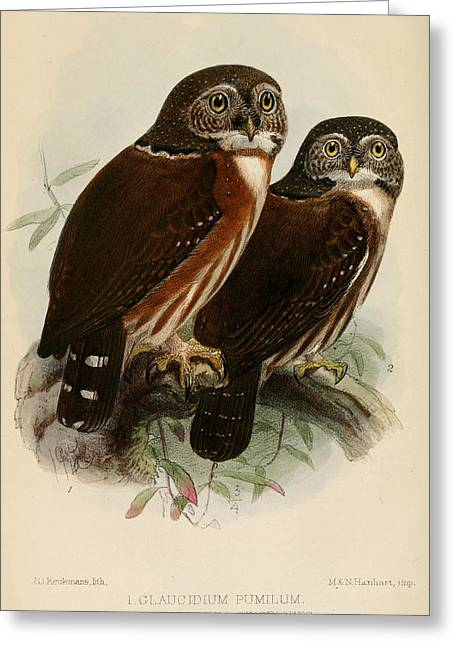 Colored Owls Greeting Cards - Owls Greeting Card by J G Keulemans