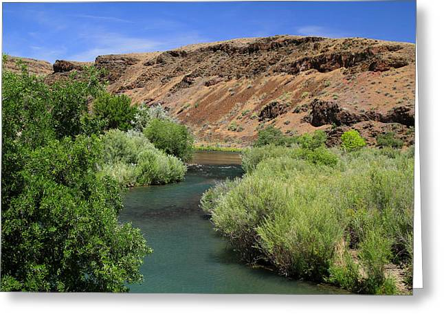 Mitchell Butte Greeting Cards - Owyhee River Great Brown Trout Greeting Card by Ed  Riche