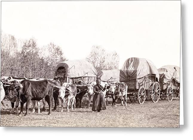 OX-DRIVEN WAGON FREIGHT TRAIN c. 1887 Greeting Card by Daniel Hagerman