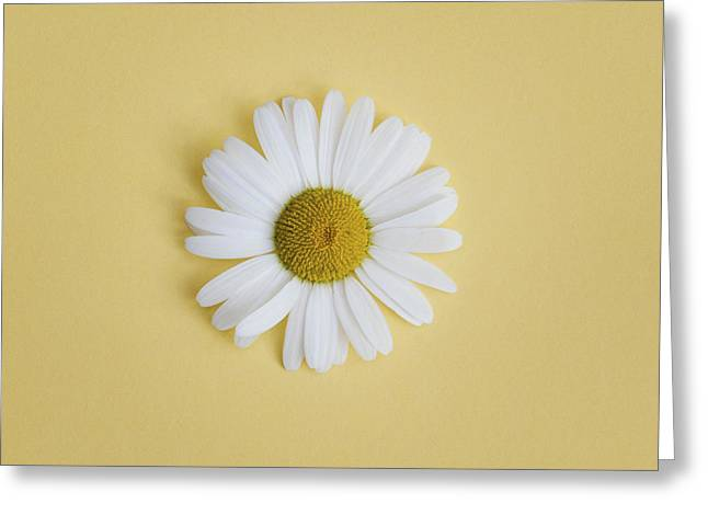 Moon Flower Greeting Cards - Oxeye Daisy Square Yellow Greeting Card by Tim Gainey