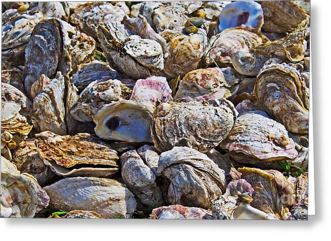 Oysters 02 Greeting Card by Melissa Sherbon