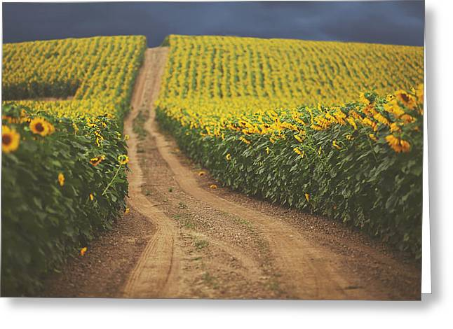Farm Landscape Greeting Cards - Oz Greeting Card by Carrie Ann Grippo-Pike
