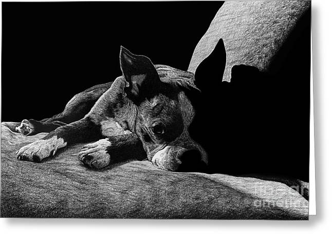 Ozzy The Boston Terrier Greeting Card by Chris Trudeau