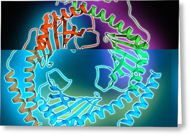 Mitochondrial Greeting Cards - P32 mitochondrial matrix protein Greeting Card by Science Photo Library