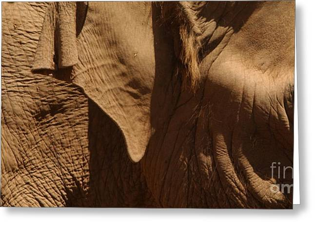 Sienna Greeting Cards - Pachyderm Panorama - San Diego Zoo Greeting Card by Anna Lisa Yoder