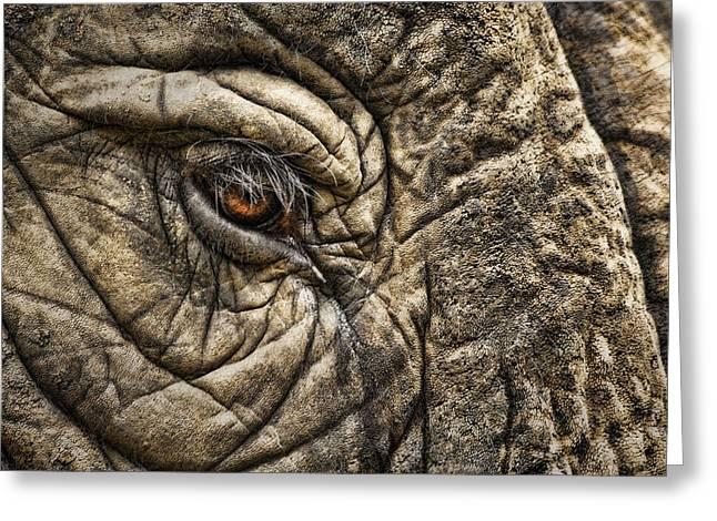 Elephants Eye Greeting Cards - Pachyderm Skin Greeting Card by Daniel Hagerman