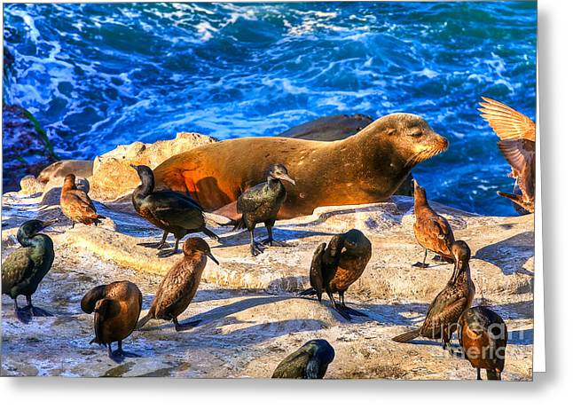 Ocean Mammals Greeting Cards - Pacific Harbor Seal Greeting Card by Jim Carrell