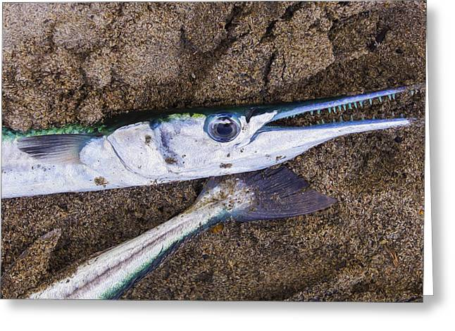 Fish Digital Greeting Cards - Pacific Needlefish Greeting Card by Aged Pixel