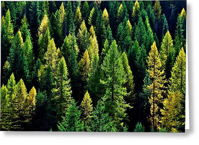 Fir Trees Greeting Cards - Pacific Northwest Autumn Greeting Card by Benjamin Yeager