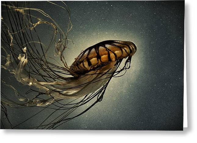 Blue Mushrooms Greeting Cards - Pacific Sea Nettle Greeting Card by Marianna Mills
