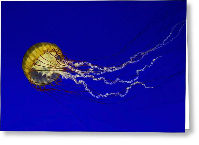 Jellyfish Greeting Cards - Pacific Sea Nettle Greeting Card by Mark Kiver