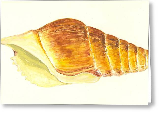 Sea Shell Art Paintings Greeting Cards - Pacific Triton Sea Shell Greeting Card by Michael Vigliotti