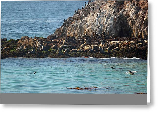 California Sea Lions Greeting Cards - Pacific View VI Greeting Card by Suzanne Gaff