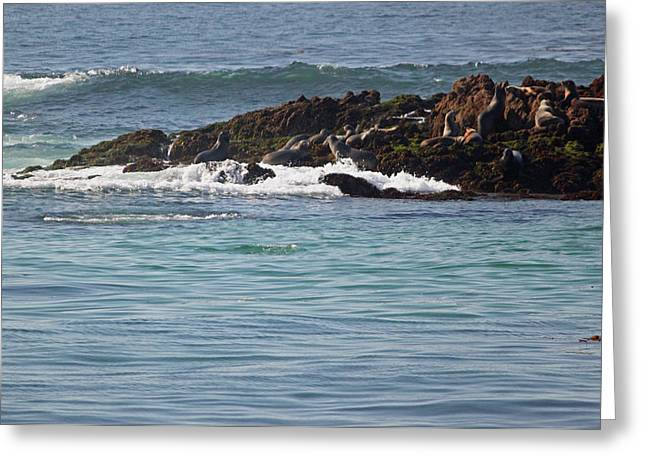 California Sea Lions Greeting Cards - Pacific View VII Greeting Card by Suzanne Gaff