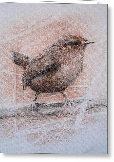 Sized Drawings Greeting Cards - Pacific Wren Greeting Card by Jan Lowe