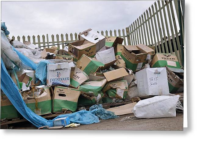 Corrugated Cardboard Greeting Cards - Packaging waste outside industrial unit Greeting Card by Science Photo Library