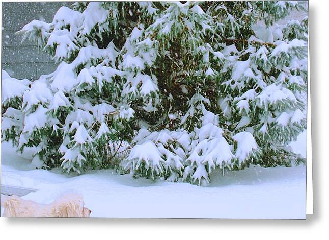 Dogs In Snow. Greeting Cards - Paco figuring out the Snow Greeting Card by Larry Bodinson