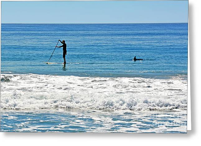 Susan Wiedmann Greeting Cards - Paddle Boarder and Dolphin Greeting Card by Susan Wiedmann