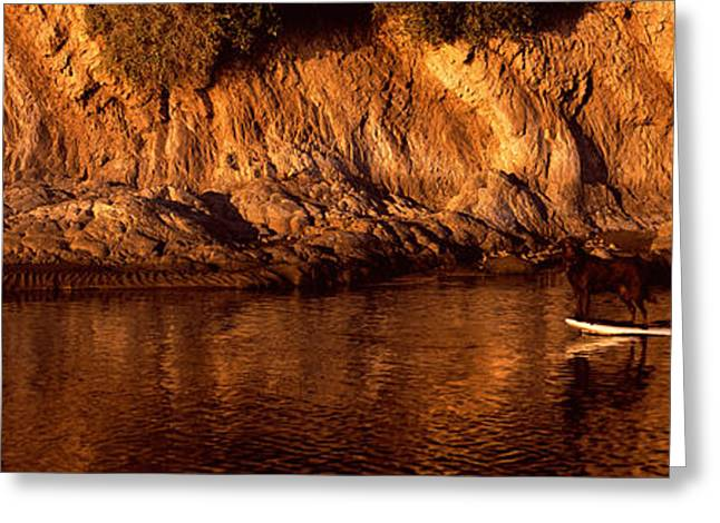 Boarder Greeting Cards - Paddle-boarder In River, Santa Barbara Greeting Card by Panoramic Images