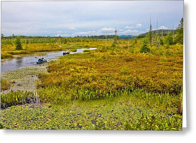 Fir Trees Greeting Cards - Paddling Browns Tract Inlet - Raquette Lake Greeting Card by David Patterson