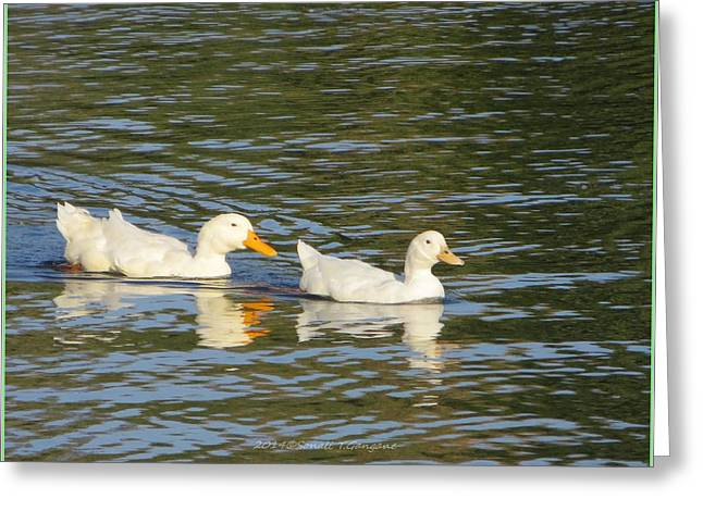 Bird Greetingcards Greeting Cards - Paddling together Greeting Card by Sonali Gangane