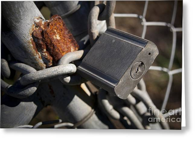 Safekeeping Greeting Cards - Padlock Greeting Card by Tim Hester