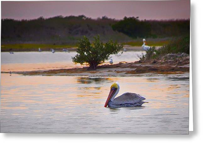 Faa Featured Greeting Cards - Padre Island Pelican Greeting Card by Kristina Deane