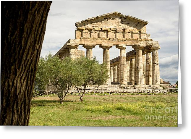 Temple Of Athena Greeting Cards - Paestum Temple Greeting Card by Prints of Italy