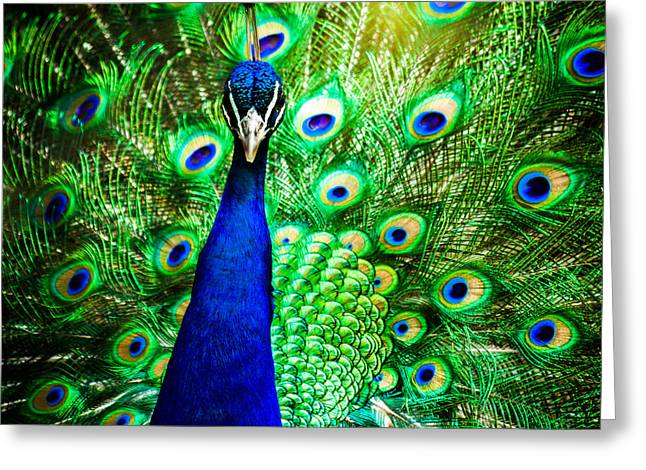 Avian Greeting Cards - Pageantry Of Colors Greeting Card by Daniel Chen