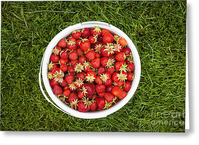 Fresh Picked Fruit Greeting Cards - Pail of strawberries  Greeting Card by Elena Elisseeva