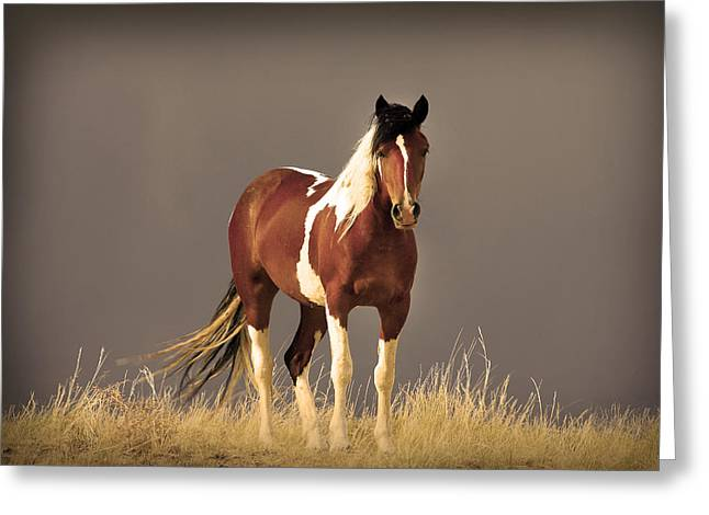 Franco Greeting Cards - Paint Filly Wild Mustang Sepia Sky Greeting Card by Rich Franco